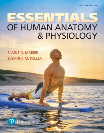 Test Bank (Downloadable Files) for Essentials of Human Anatomy and Physiology, 12th Edition, Elaine N. Marieb, Suzanne M. Keller, ISBN-10: 0134394194, ISBN-13: 9780134394190